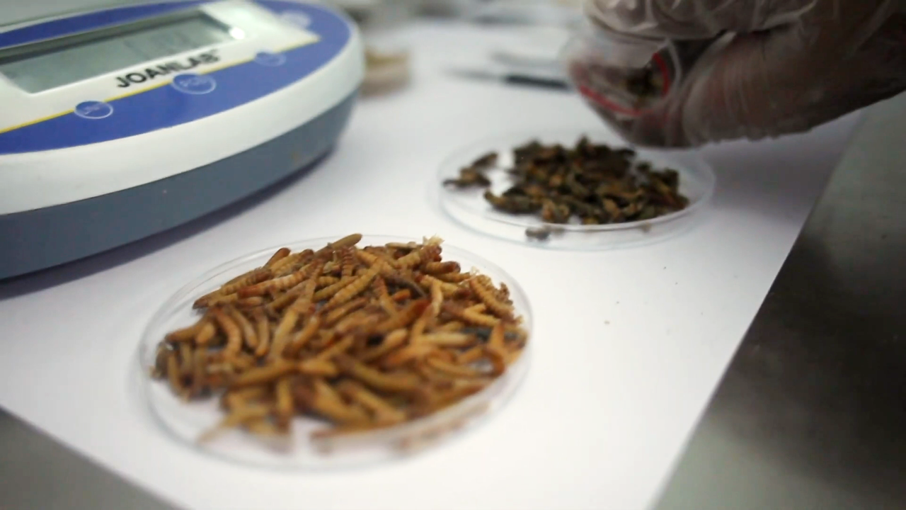 La carne cultivada y la proteína de insectos transformarán el sector alimentario en los próximos años hacia la sostenibilidad y la mejora en la salud